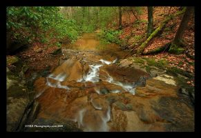 Along Campbranch Trail by TRBPhotographyLLC