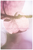 Pink leave II by JunnyPhotography