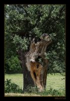 The old tree by RRVISTAS