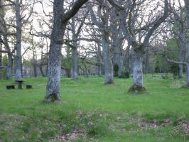 old trees by malicia-stock