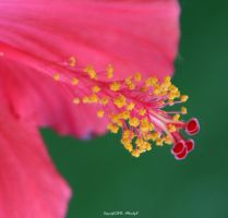 SiMpLy A StAmEn by Allandgr8-art