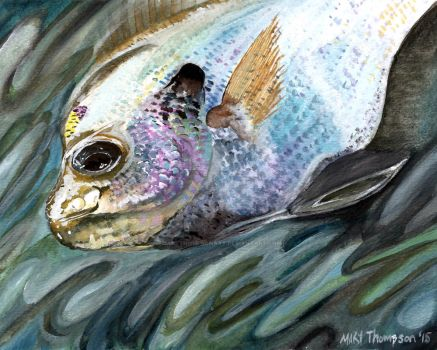 Bluegill 001 by MaryThompsonArt