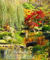 Japanese Garden by jhagood23