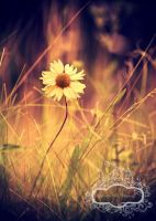 I Know Where I Belong... by Blue-Clouds