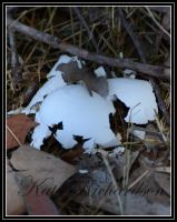 crushed Tawny Frog mouth egg by Purple-Dragonfly-Art