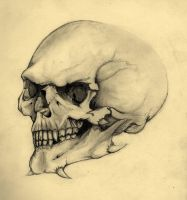 Stylised skull 2 by RottenRoo