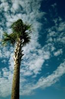Palm by Finchley