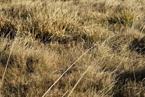 yellow autumn mountain grass 1 by deepest-stock