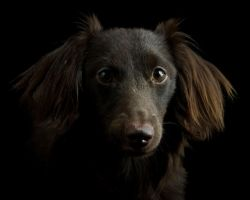 Portrait of Little Buddy by bnspencer