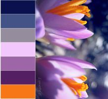 Colour Spectrum 2 by lynetteenright