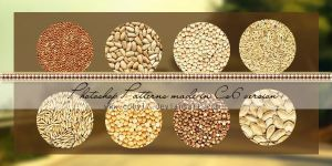 Cereals And Grains Patterns by Coby17