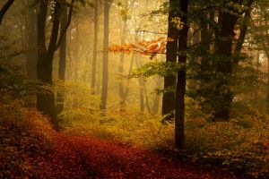 Foggy Misty Autumn Forest 4 by khoirulmahmudinstock
