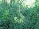 Fawn in the Tall Grass 2 by Windthin