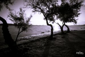 trees, the sea and the sun by rdalpes