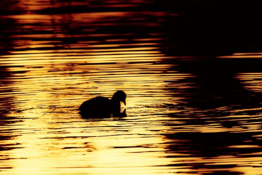 Gilded Sunset by janeperryphotography