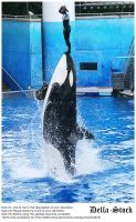 Sea World: Shamu Jump.6 by Della-Stock