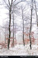 First Snow by MeAli-ADK