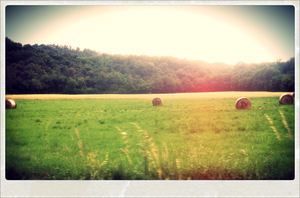 Country summer by MonicaYar