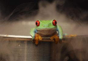 How to boil a frog V4 by AngiWallace
