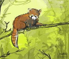Red Panda by ISHAWEE