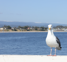 Seagull - 1 by vixentheangryfox