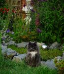 Loki By The Pond by Forestina-Fotos