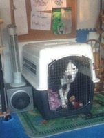 Guess What Dummy Trapped Himself In The Crate by iW-O-L-F