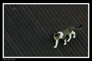 Cat on a hot tin roof by bingbing51