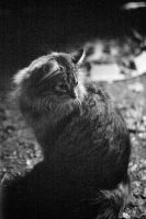 my cat XXI by thehomeboy