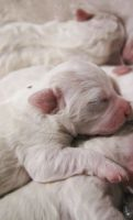 Puppies, sleep by wellgraphic