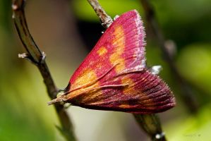 COLORFUL MOTH by Sandy33311
