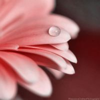 Pink drop by FrancescaDelfino