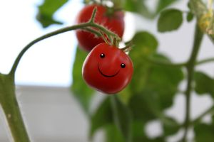 Happy Tomato by TANTTA69