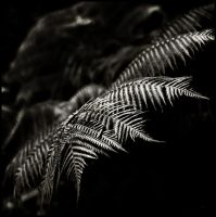 pele's fern by sublimeone