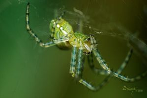 greenspider by dhead