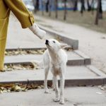 dog from the street by MotyPest