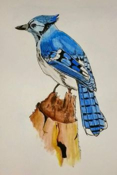Blue Jay by DParkerEdwards