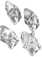 Smilodon reconstruction by dewlap