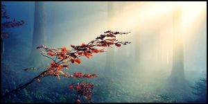 Hazel in the fog by elscotto