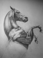 Horse drawing by MeWannaLearn