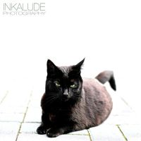 Black cat by Inkalude
