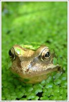 Brian the Frog by aneurin