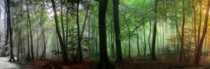 The Seasons of the Forest  Panoramic by CeriDJones