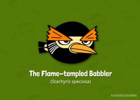 The Flame-templed Babbler by Filipeanuts