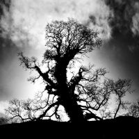 Oak+Sun by Coigach