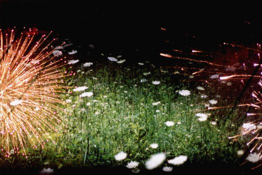 fireworks and flowers by guost