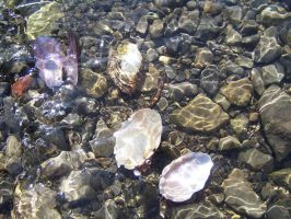 Shells under water 3 by Hermit-stock