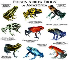 Poison Dart Frogs of Amazonia by rogerdhall