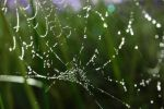 Web in light 1 by rebekahlynn-photo