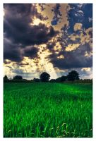 Sky and Grass by Riffo